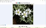 photo program: Veneta Viewer