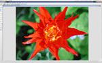 photo program: WildBit Viewer